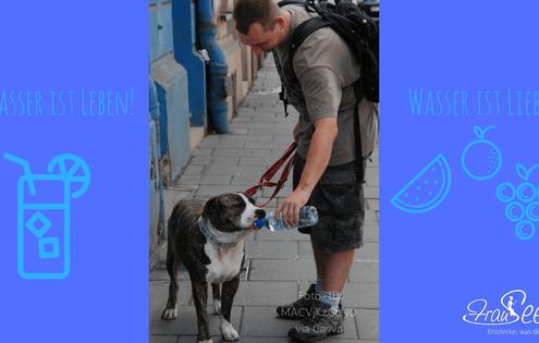 Wie du genügend Wasser trinkst