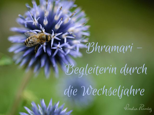 FrauSeele Bhramari wie dich das Brummen der Biene in den Wechseljahren unterstütz